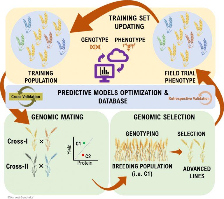 Genomics_Selection_Harvest_Genomics
